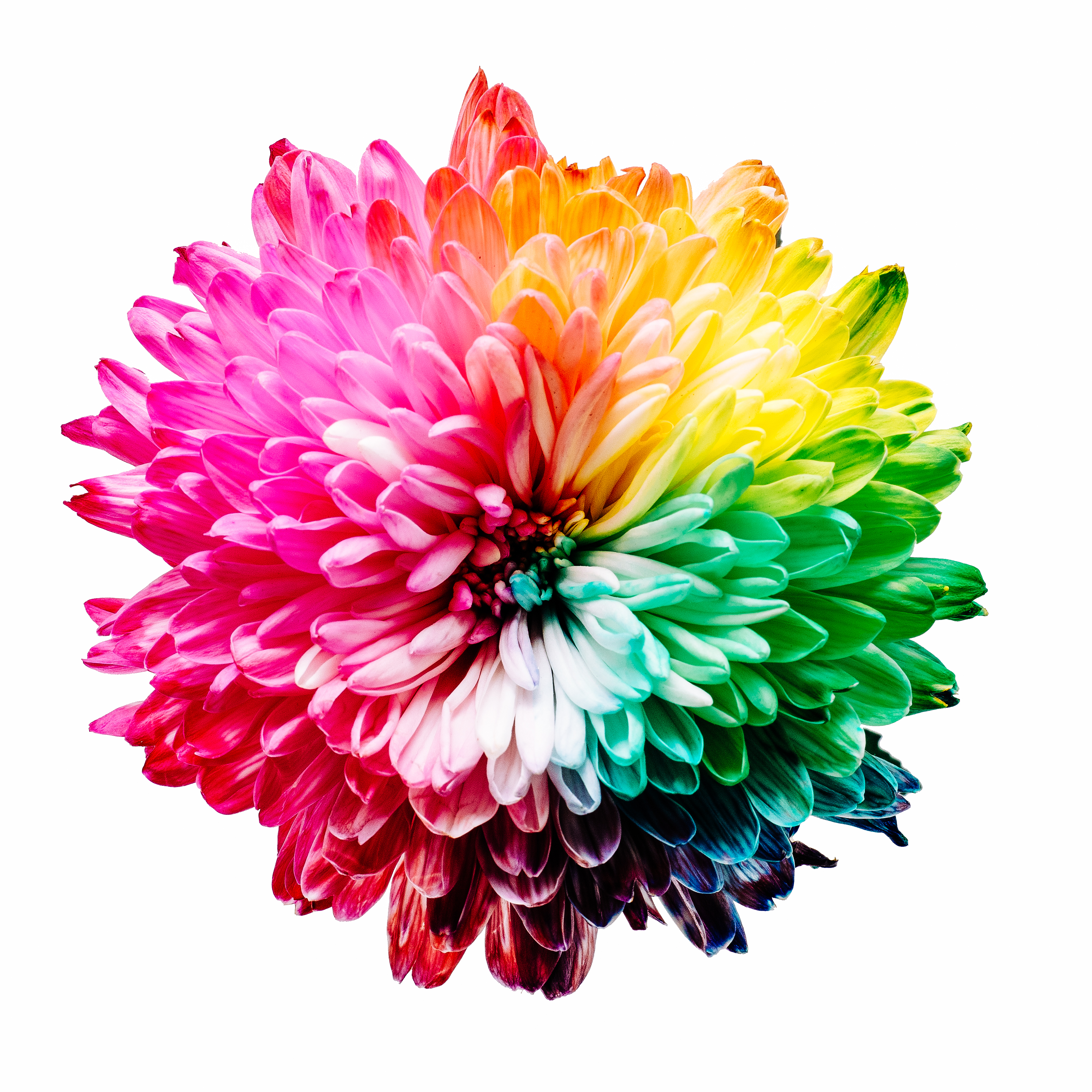 Multicolored Flower Il Ration