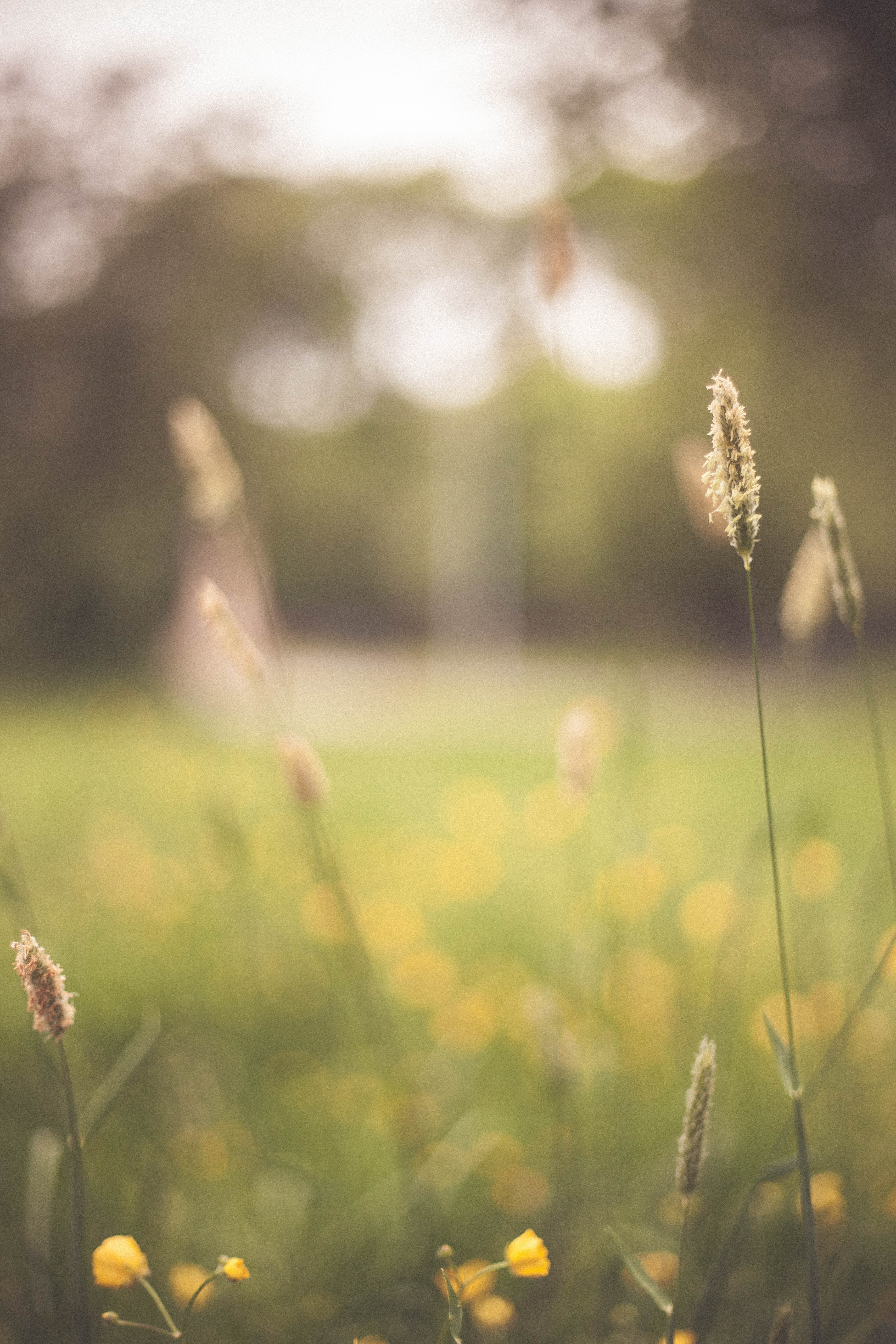 Wildflower in grassy field at daytime with blurry background