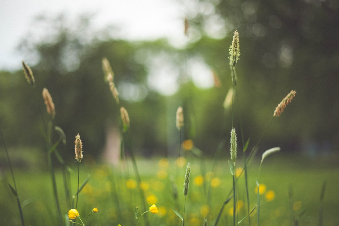 Flowering grass up close