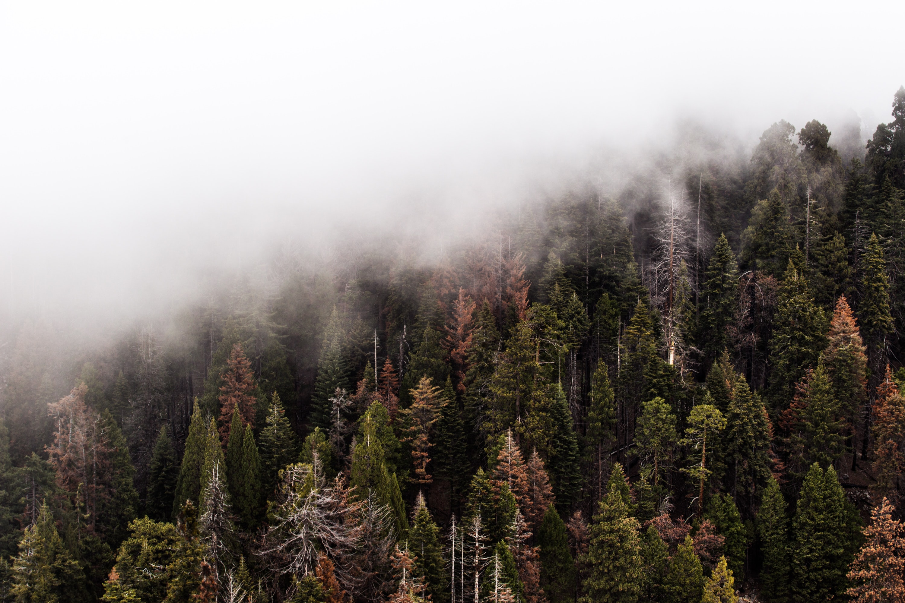 aerial photography of foggy forest at daytime