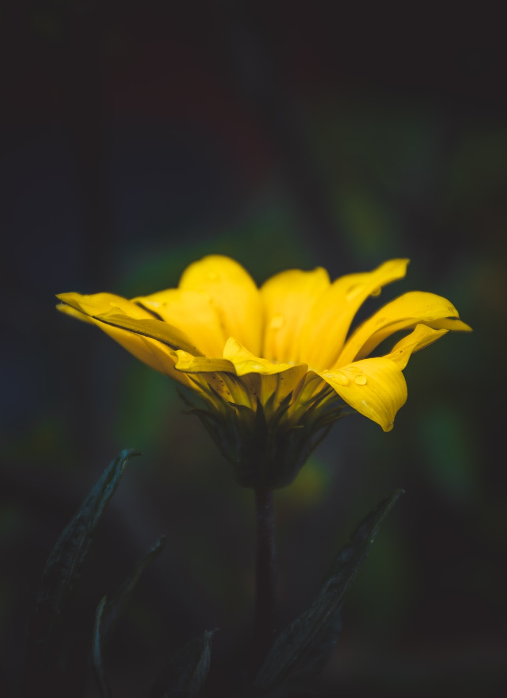 selective photography of yellow petaled flower