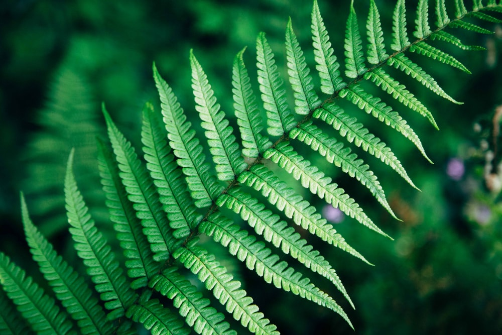 closed-up photo of green fern plant