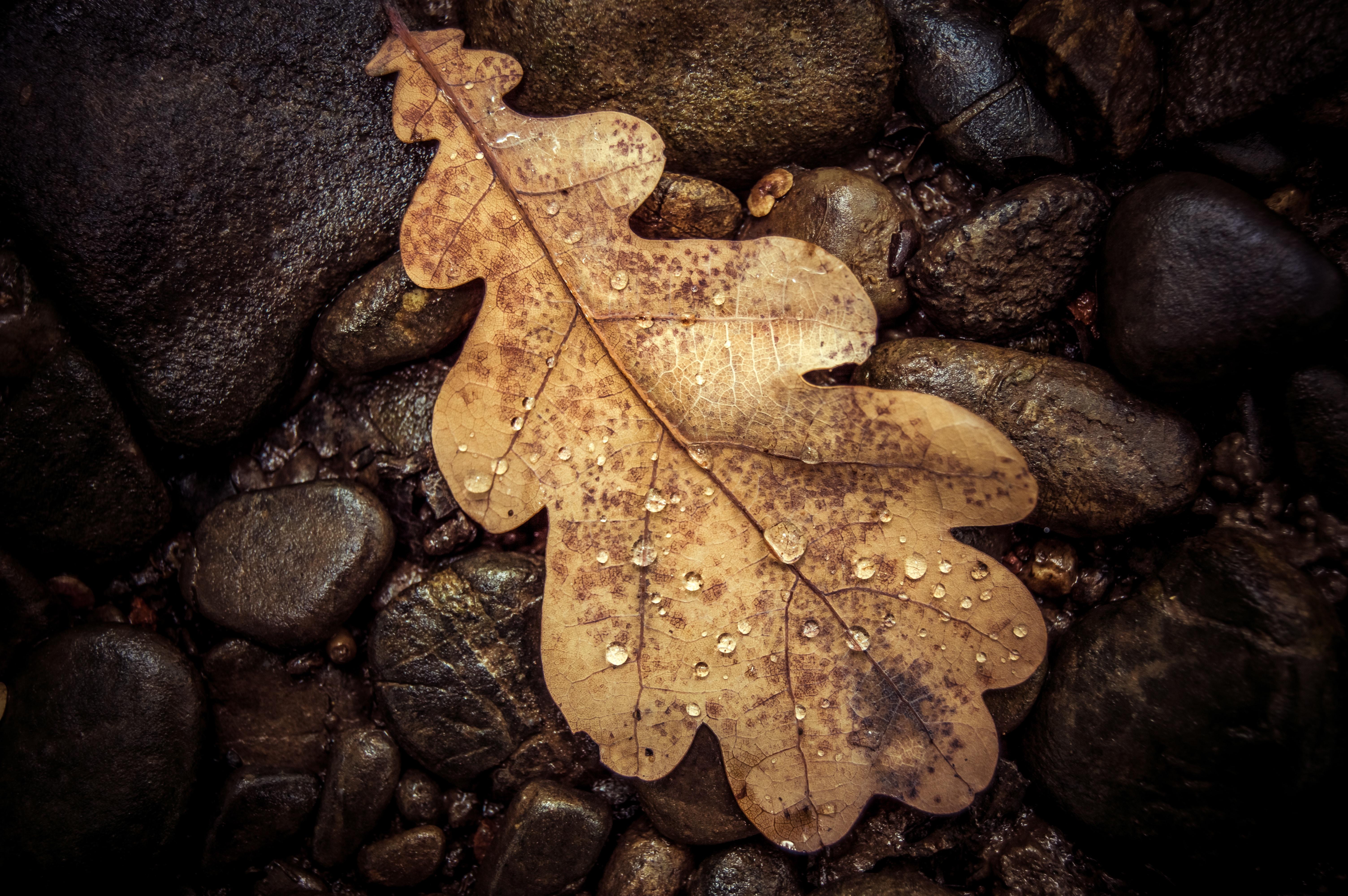 brown leaf on brown stones
