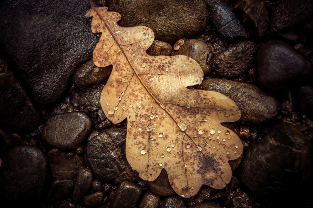 brown leaf on brown stones
