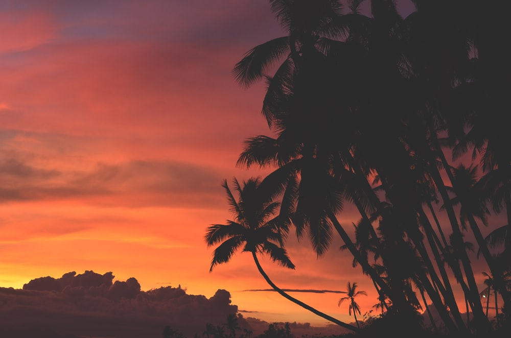 coconut trees under orange and red sky