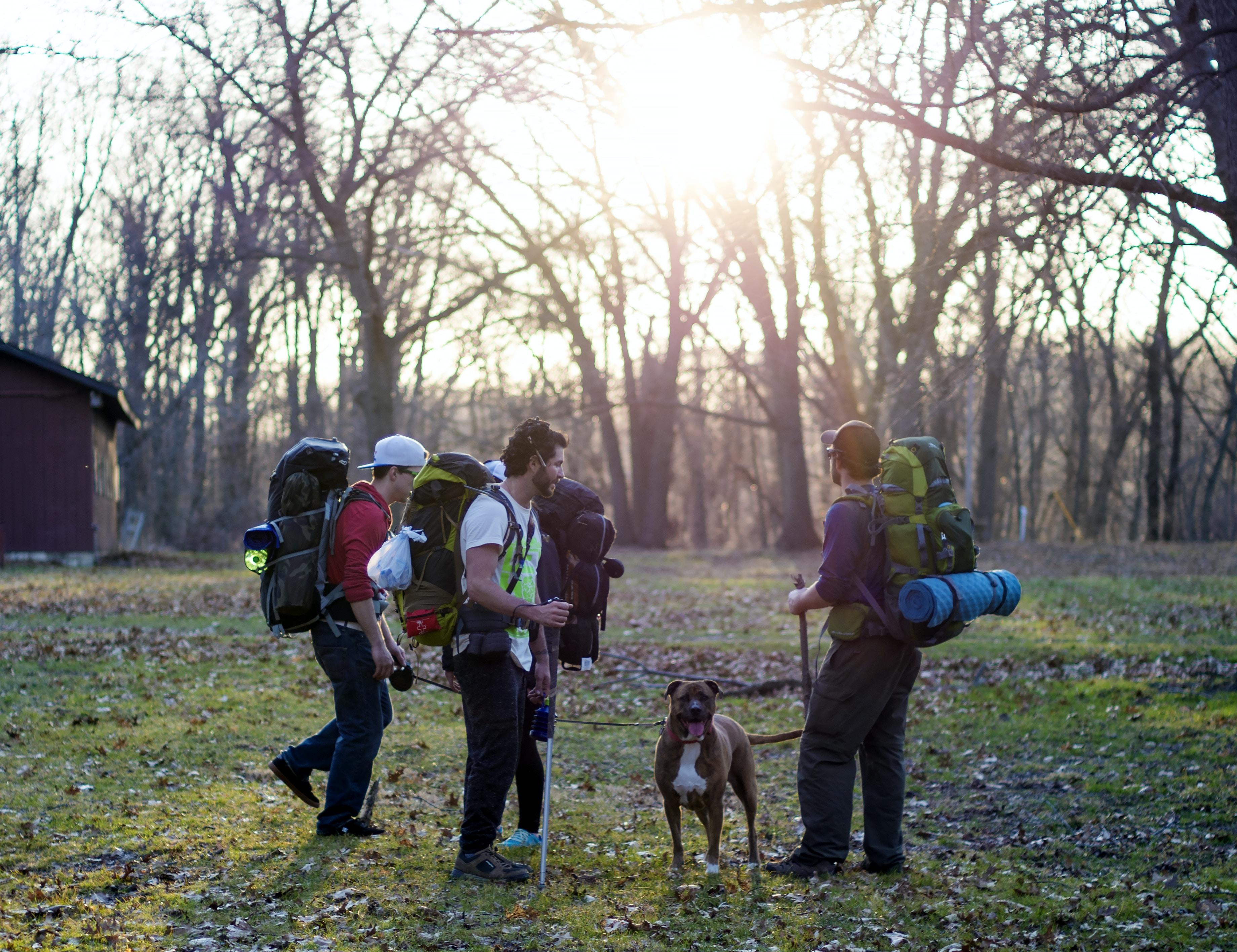 Pet dog walking adventures