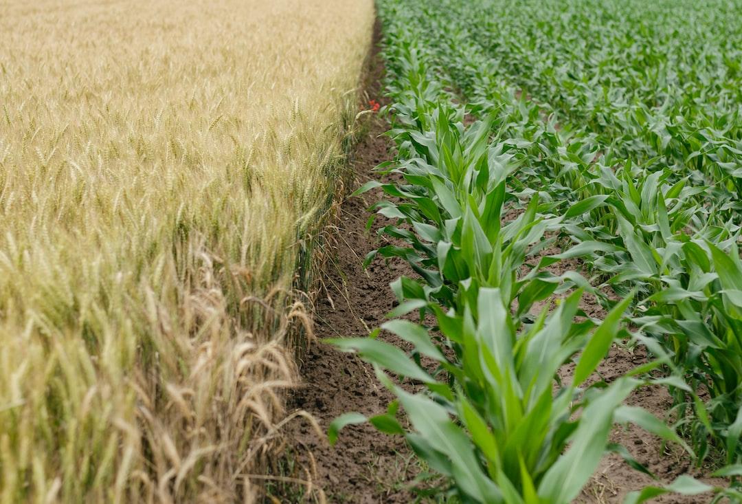 Superweed Saga: Australia's Creative Tools to Fight Herbicide-Resistant Weeds