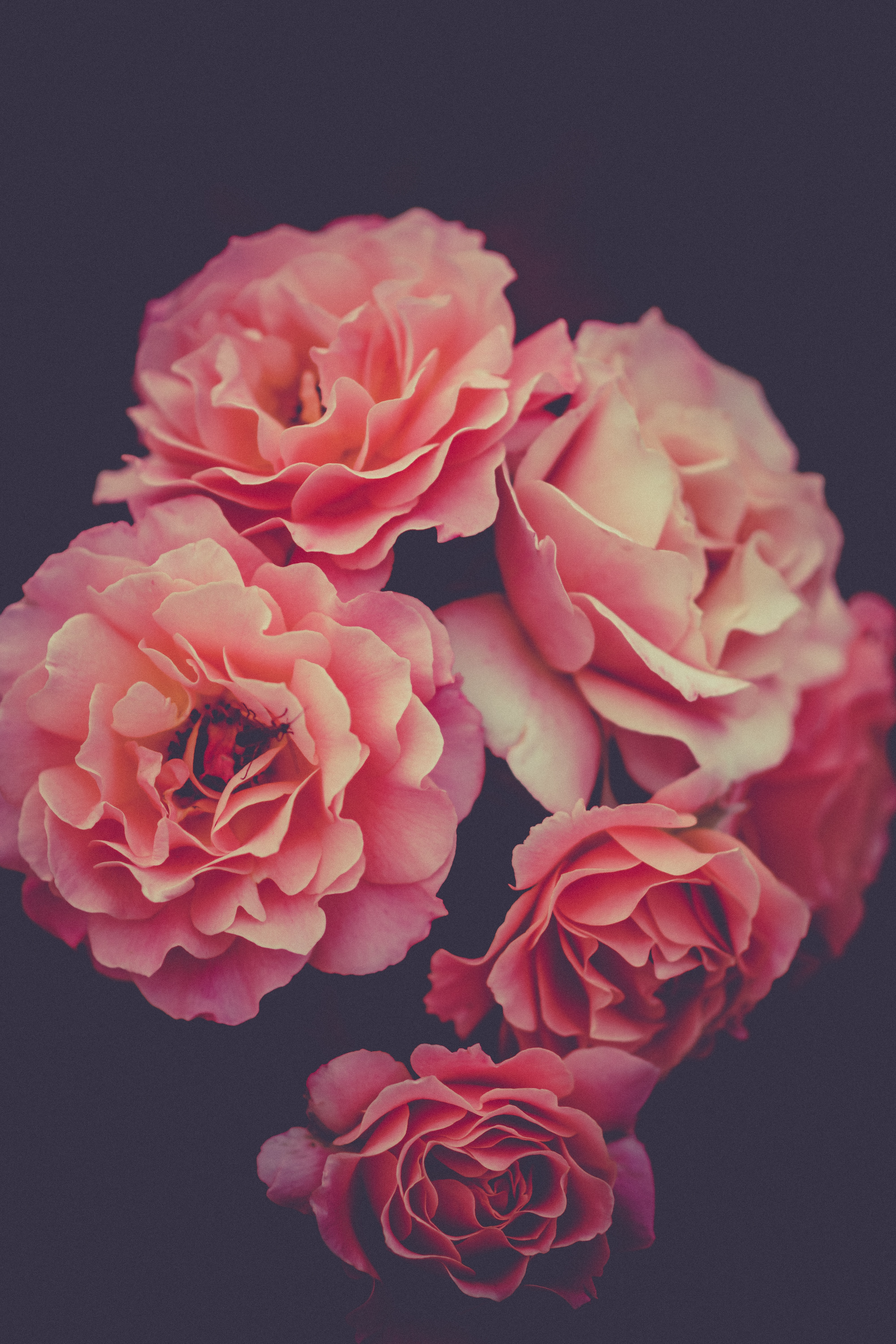 Floral Bouquet Of Fresh Pink Roses From The Flower Garden