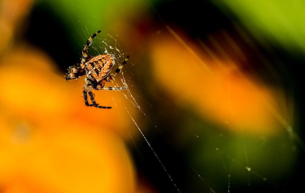 closeup photo of spider on spiderweb