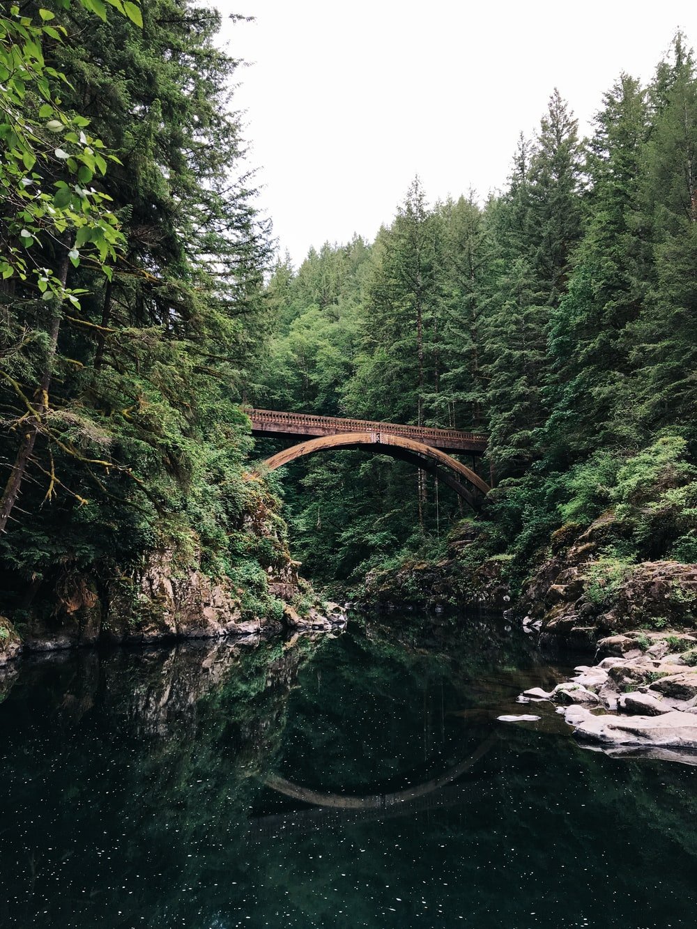 bridge near forest