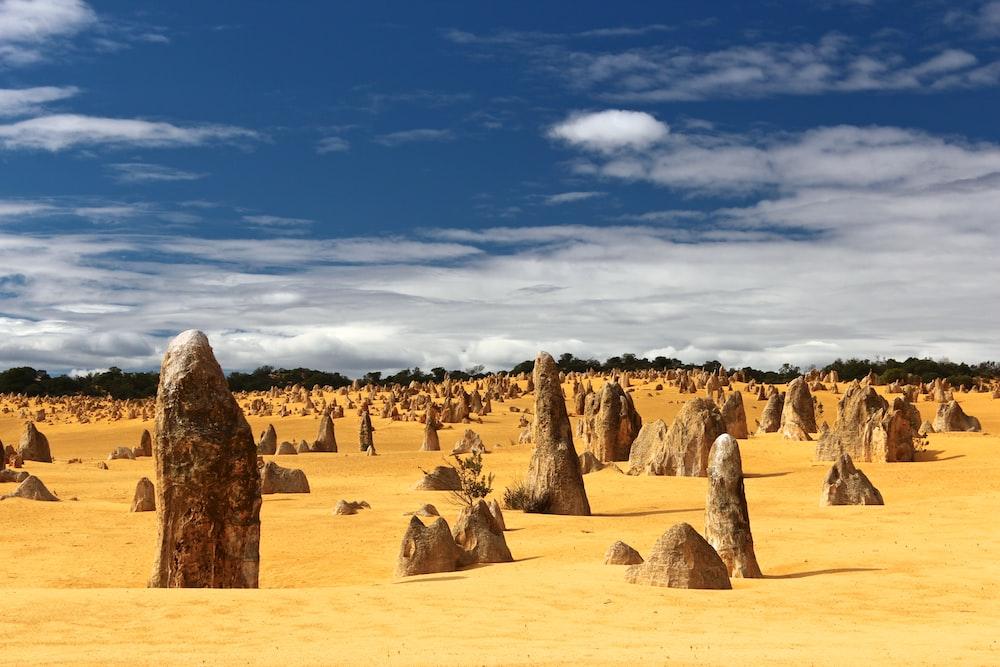 field of rocks