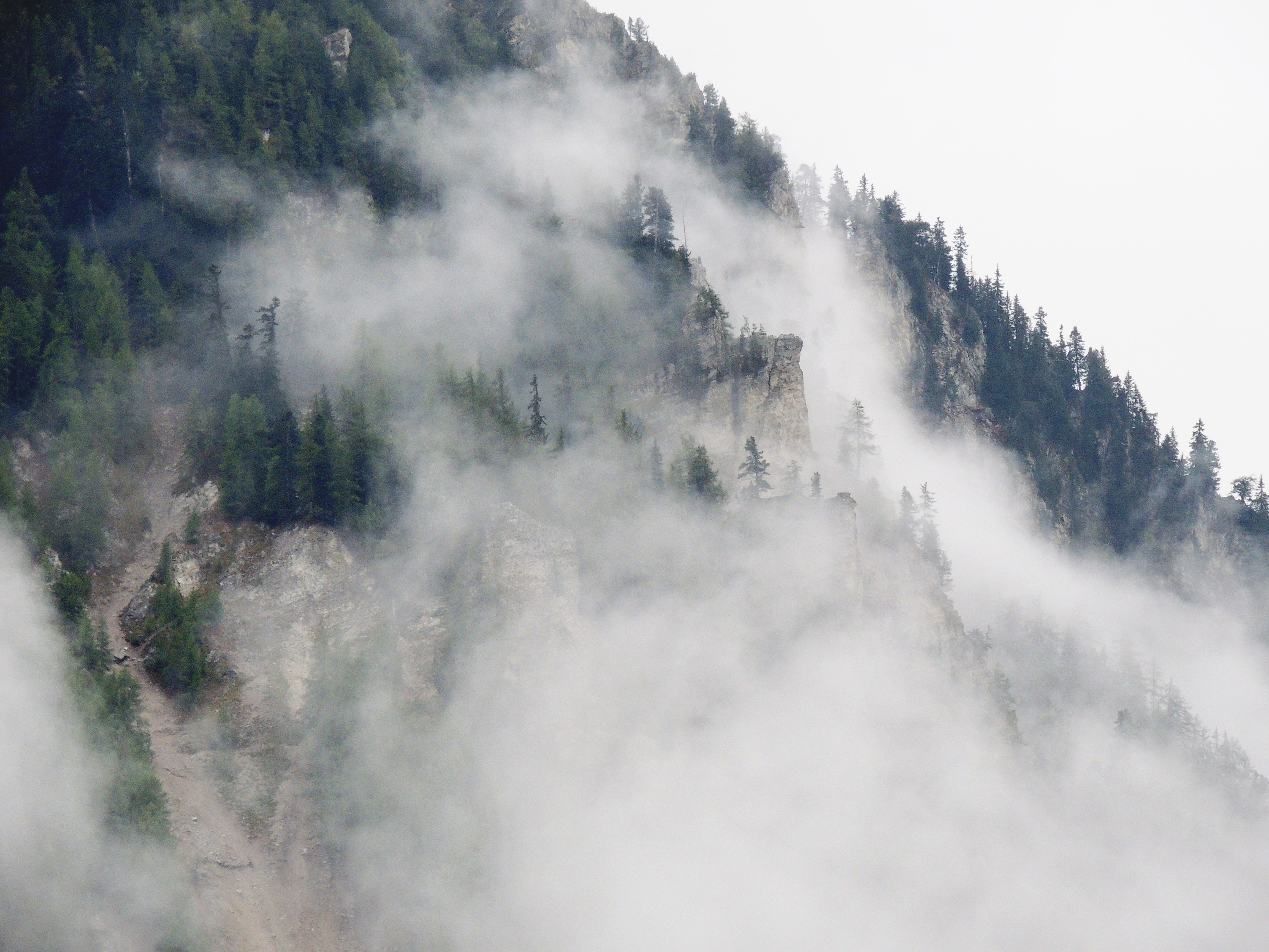 Mist rolling down a jagged mountain slope covered with coniferous trees