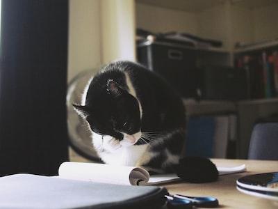 Cat photo by Daria Nepriakhina on unsplash.com