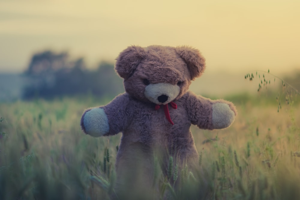 teddy bear pictures download free images on unsplash