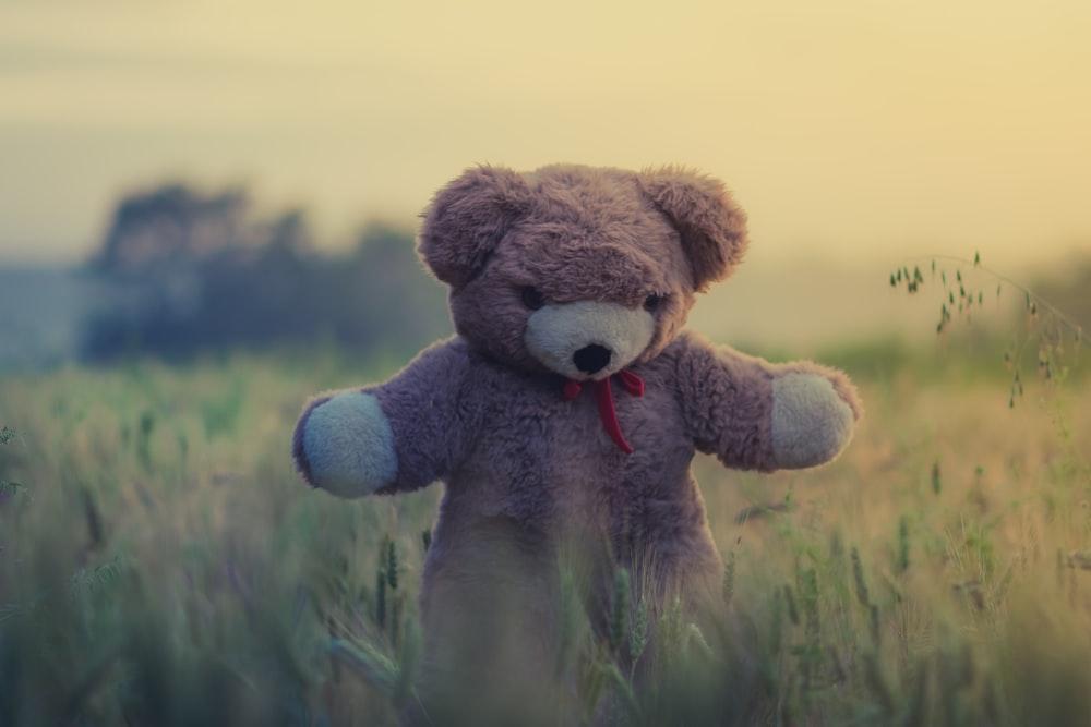brown teddy bear on green grass