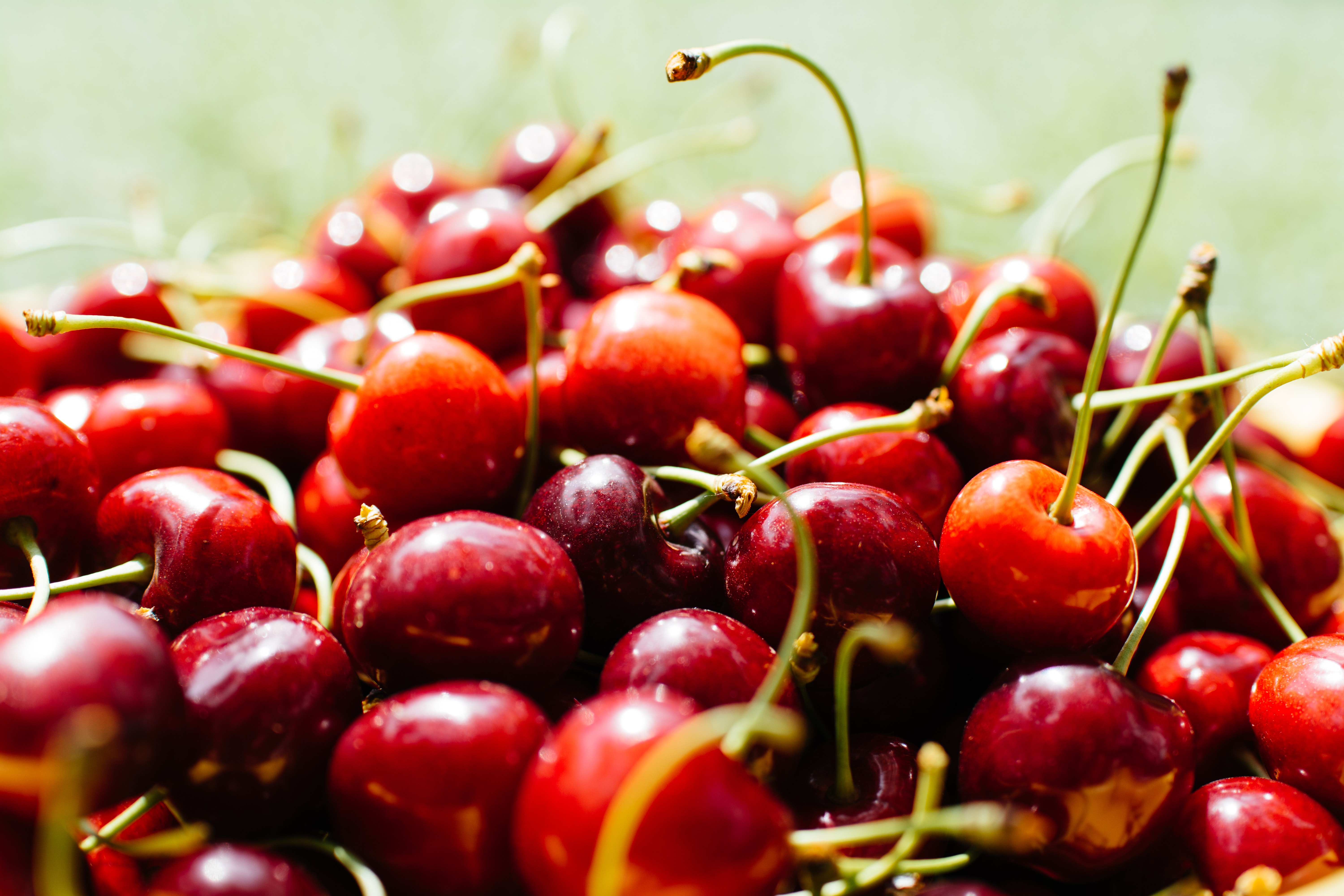 Pile of fresh bing cherries with long stems