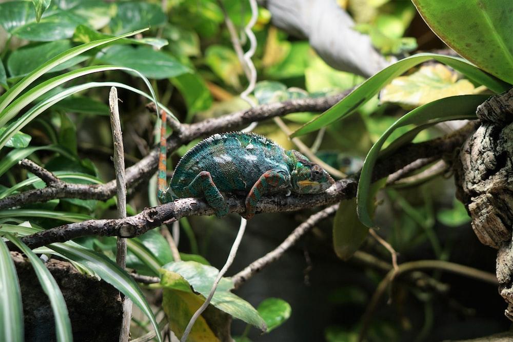 green animal on tree