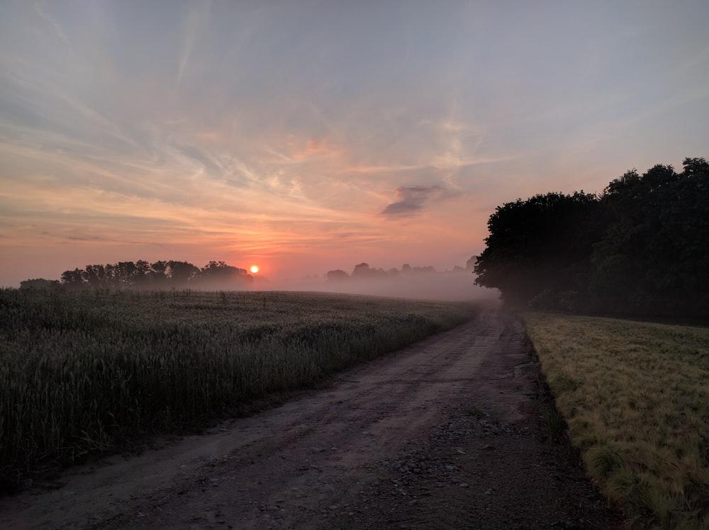 gray road between green grass during sunset