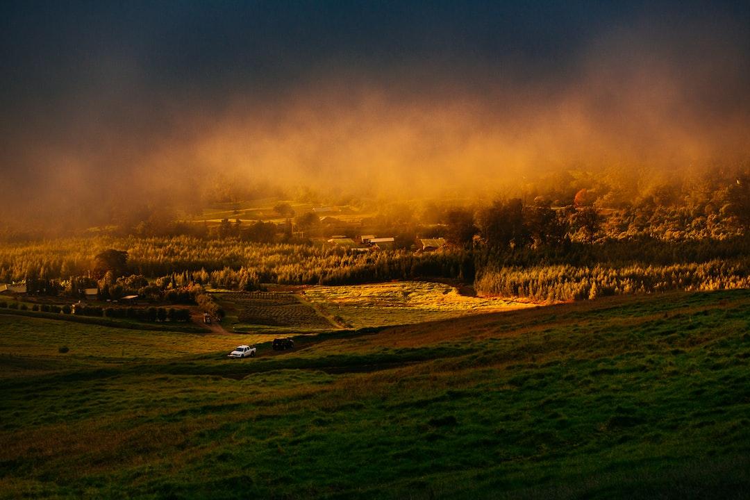 Foggy countryside