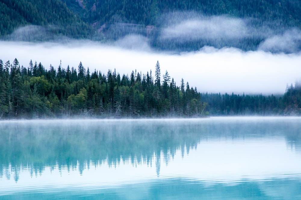 body of water surrounding with trees