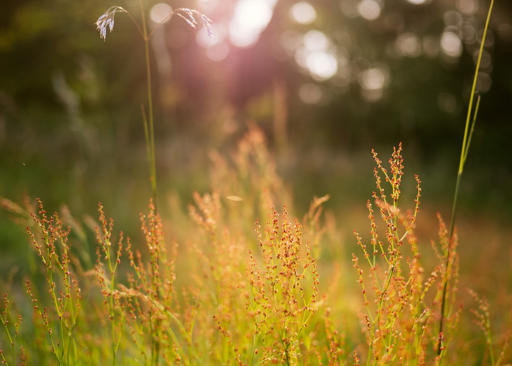 macro photography of wheath