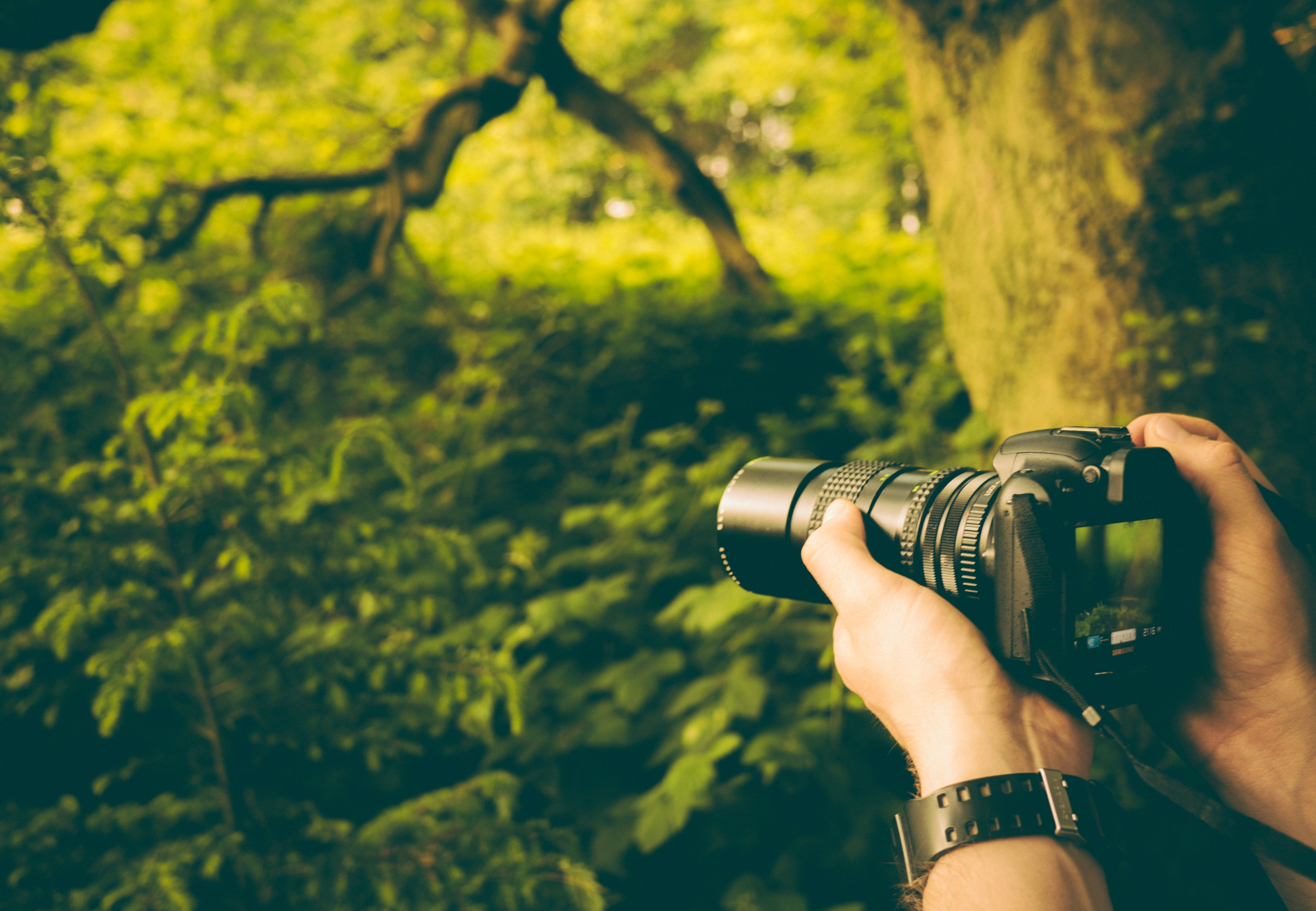 person holding DSLR camera taking picture of trees