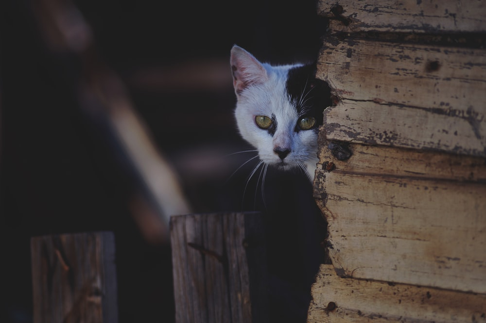 shallow-focus photography of white cat