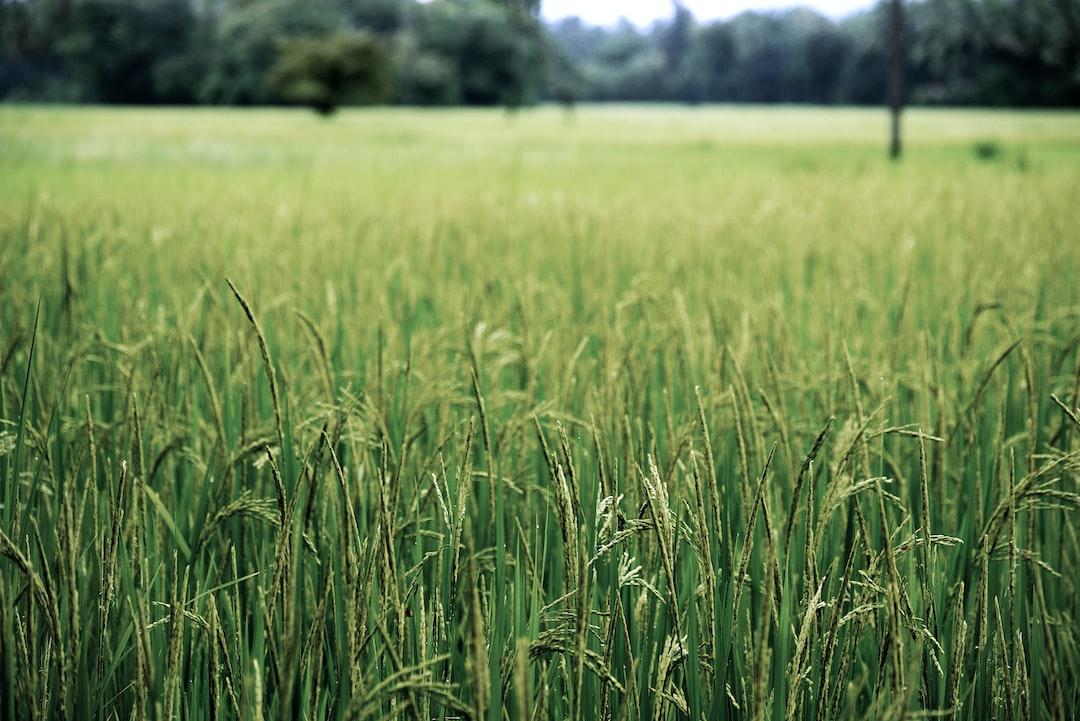 Agricultural/Horticultural Scientist