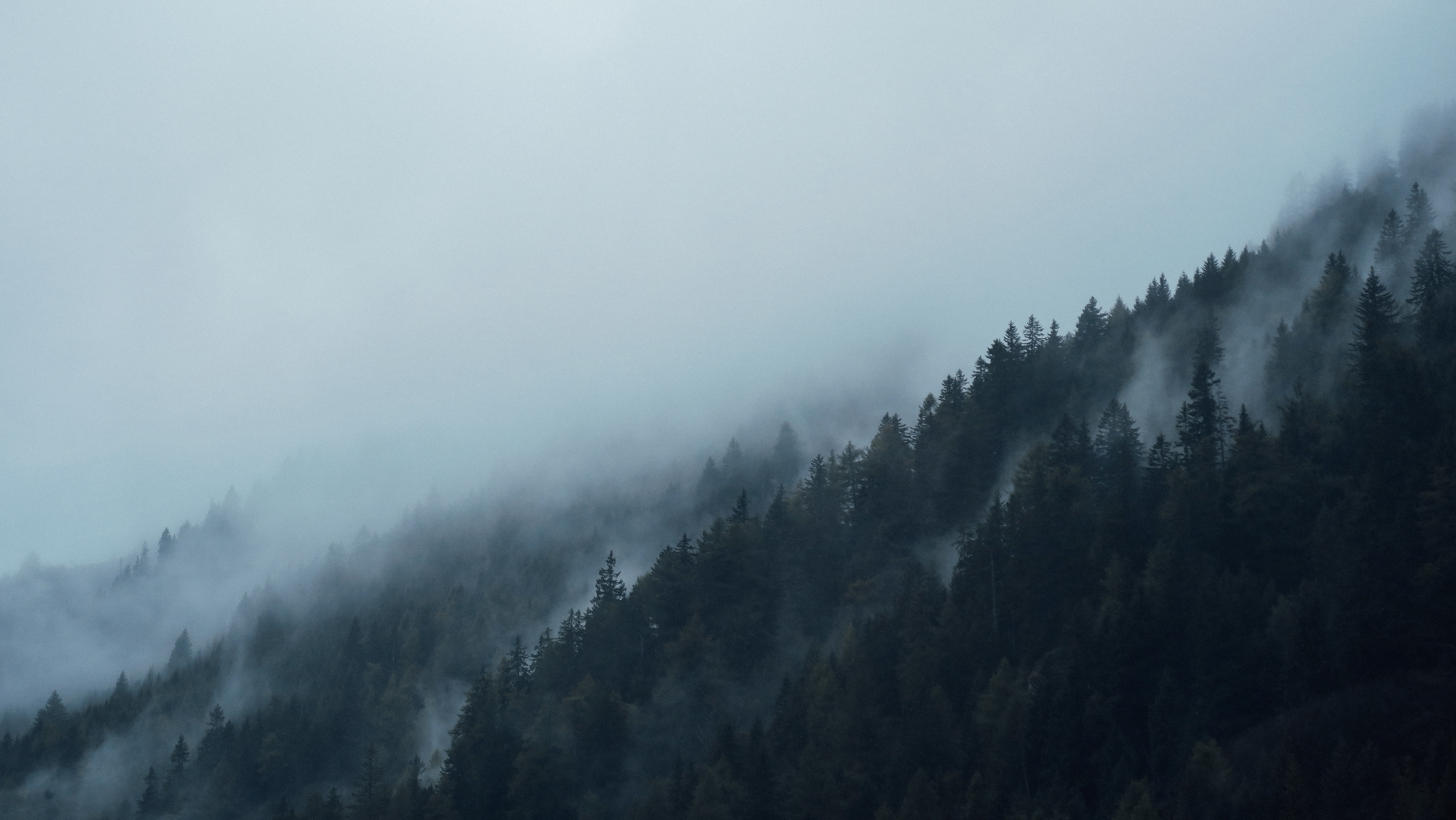 Mist enveloping an evergreen forest in Brenner Pass