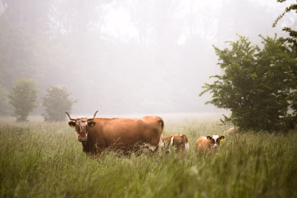 brown cattle in the middle of forest