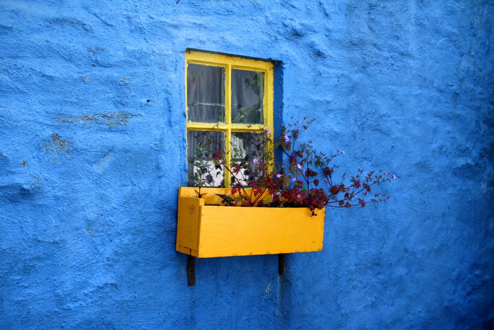pot on window with flowers