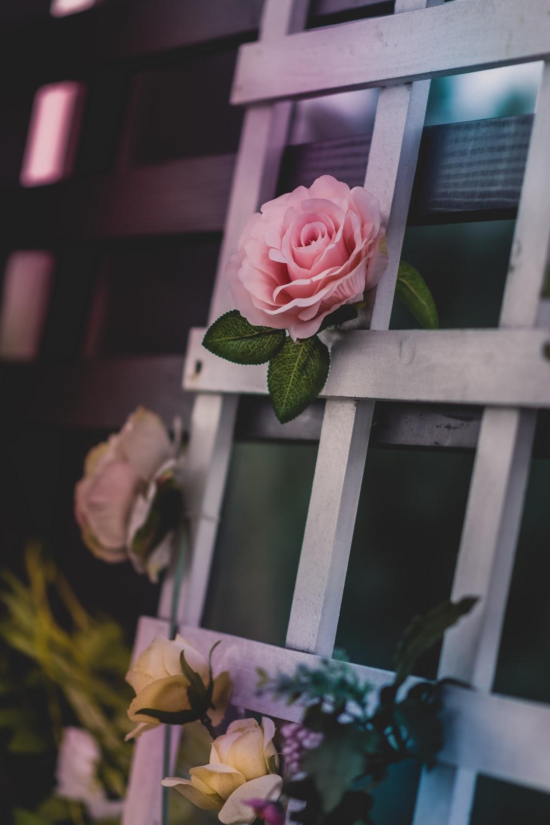 Rose latticework