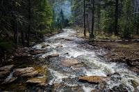 Forest stream water