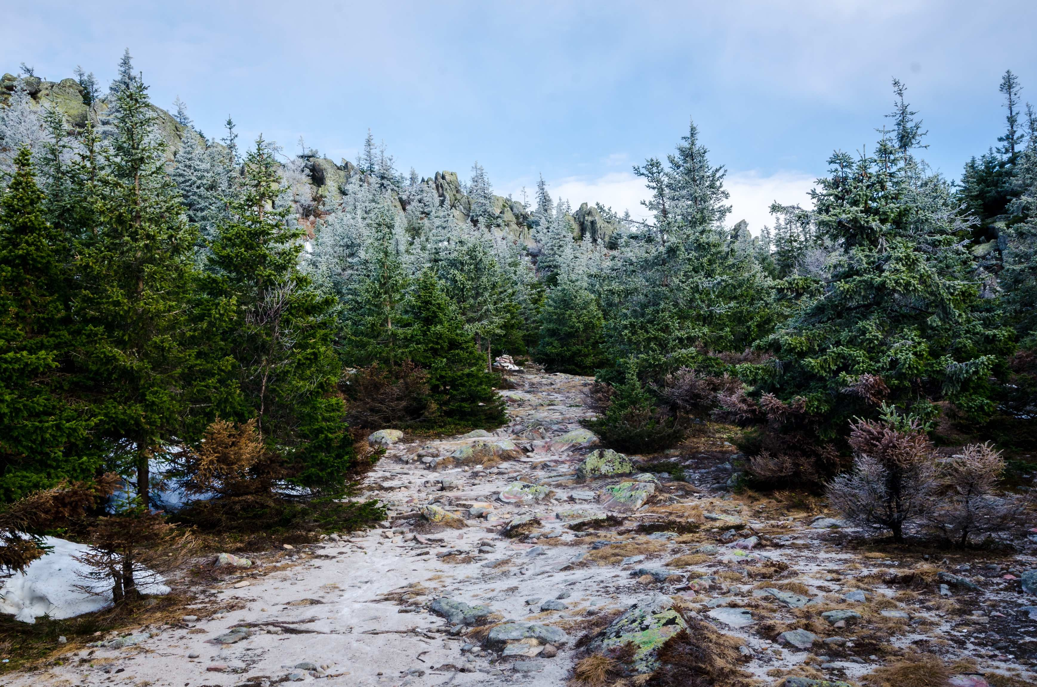 A light layer of snow covers a path leading up into a forest of evergreen trees