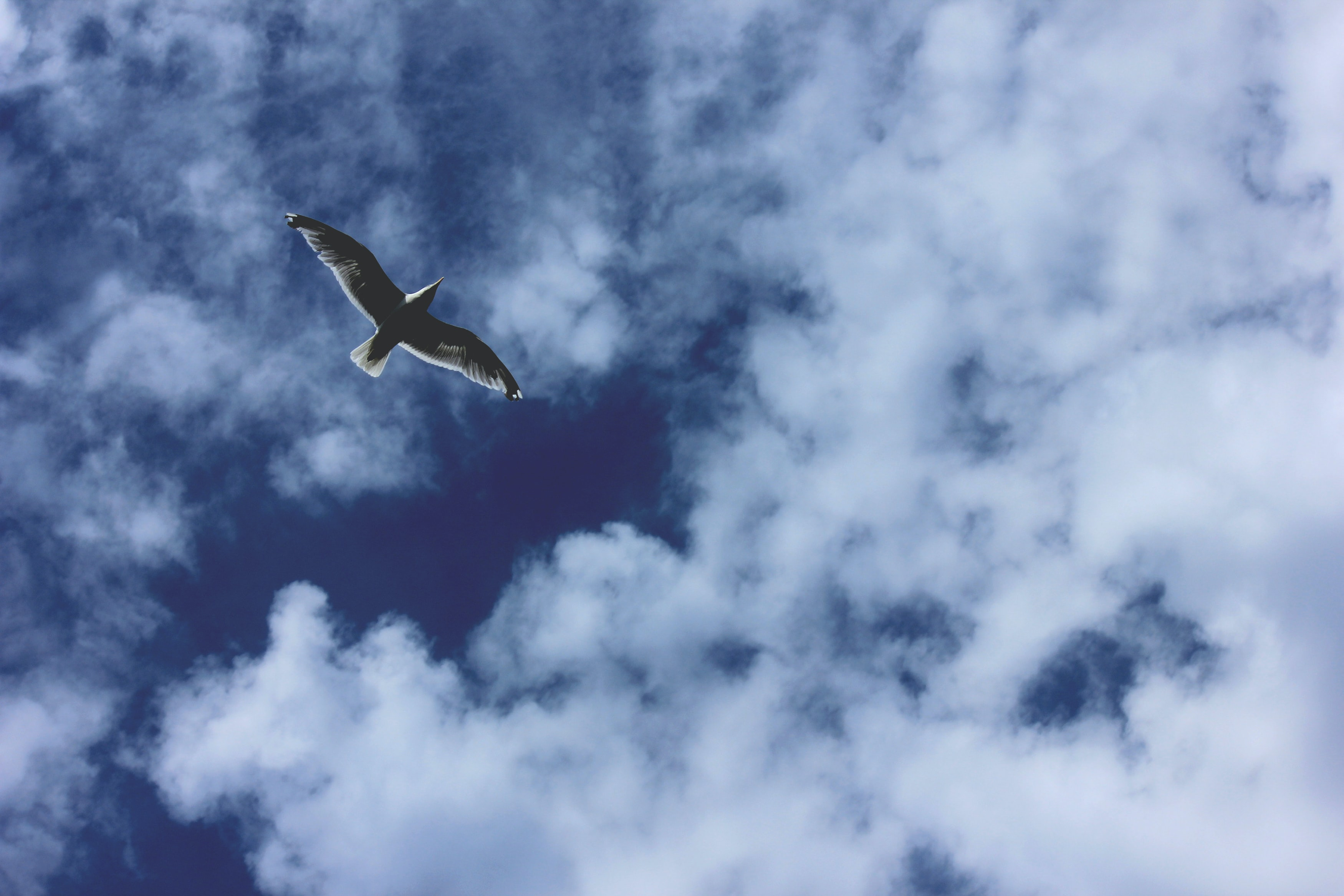 photography of bird flying in the sky