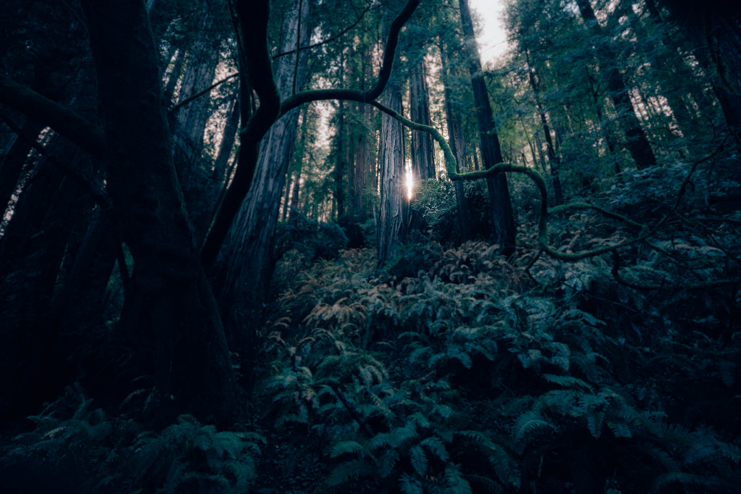 A green, mossy forest with the sunlight leaking through in San Francisco