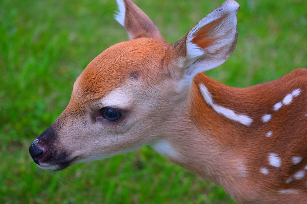 photography of brown deer