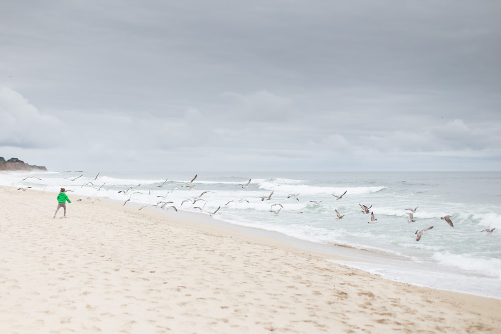 person standing on sand shore near flying birds