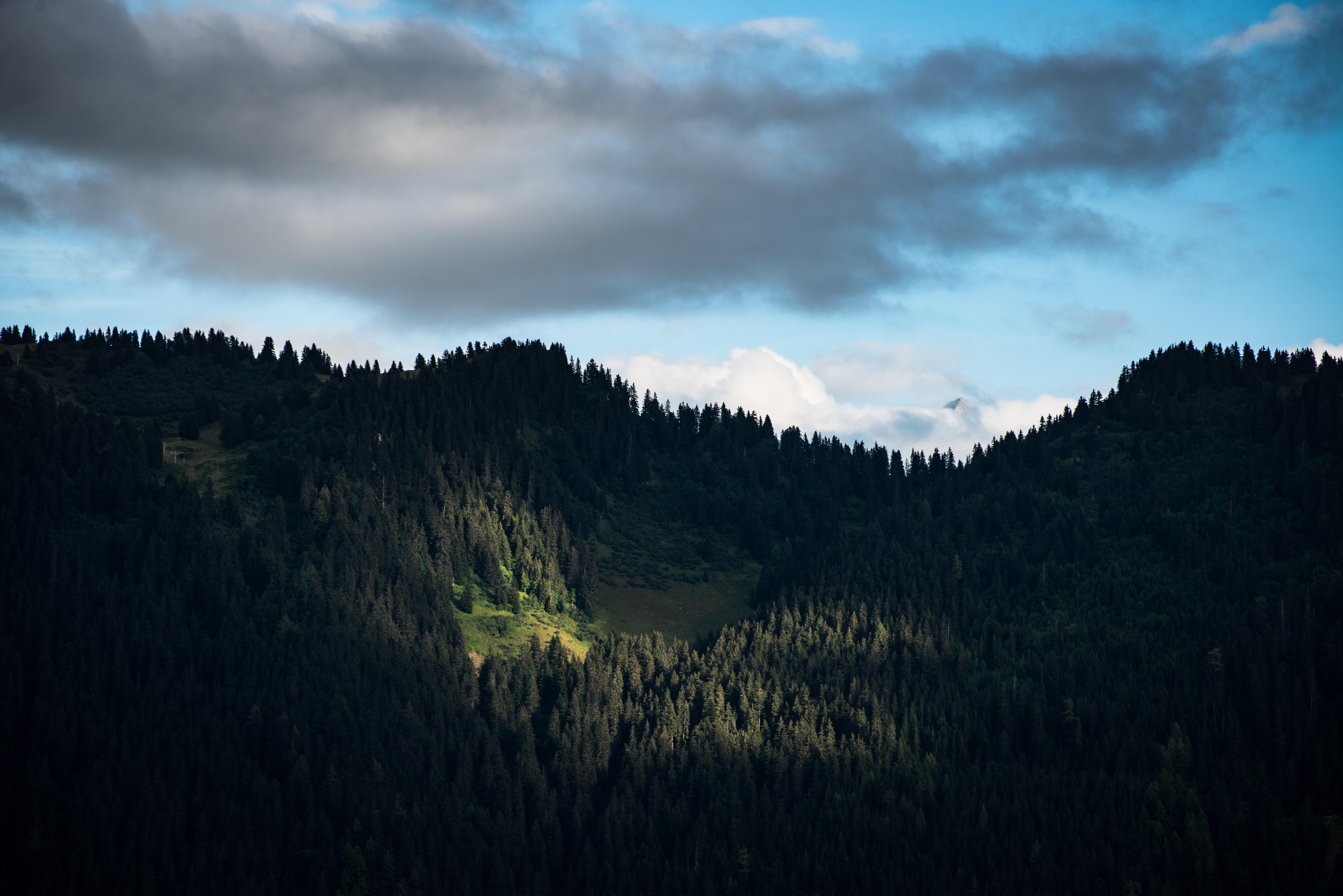 Dark woods on mountain slopes in Leysin