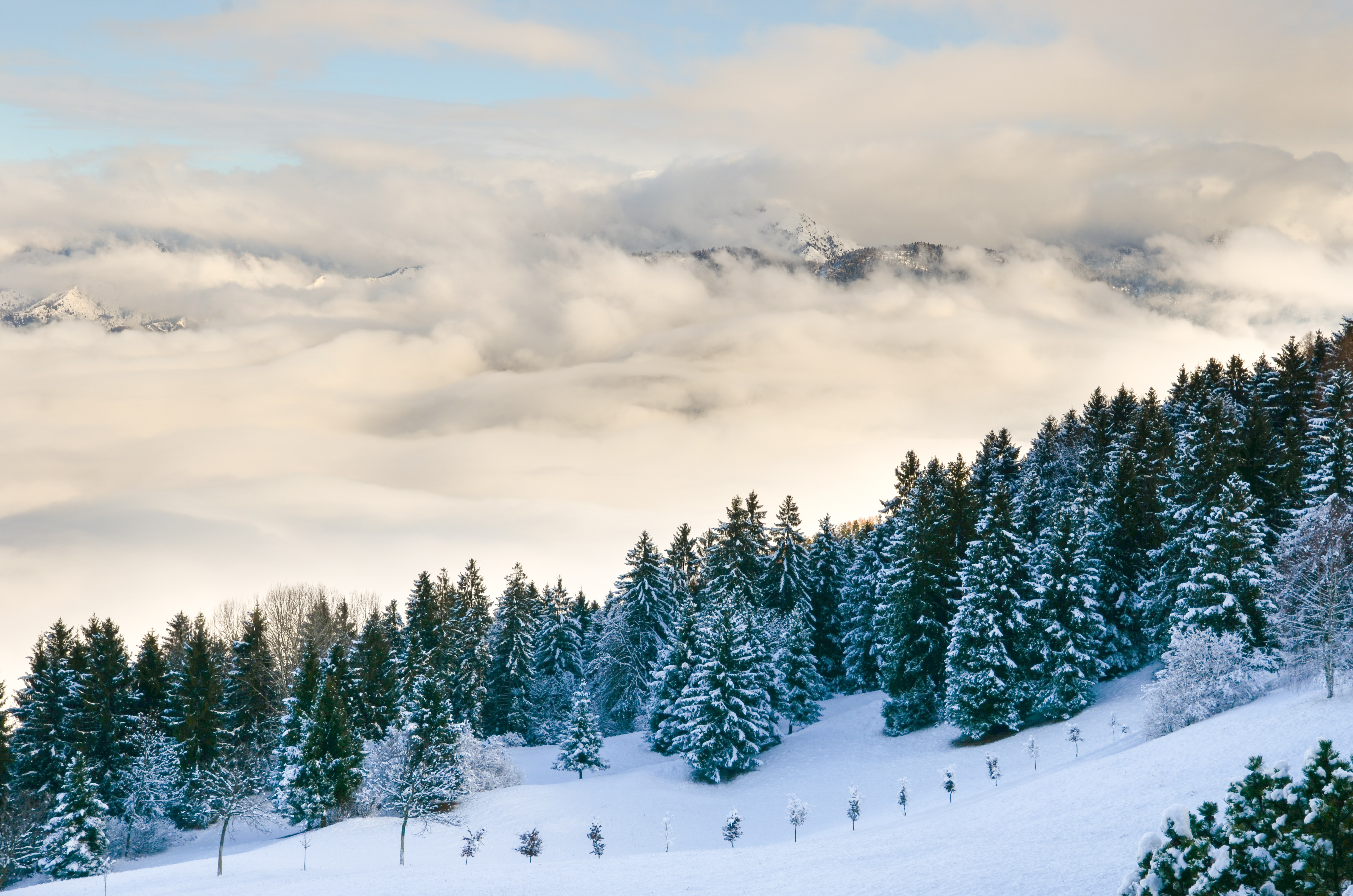 A large cloud  behind a tree-lined mountain covered in snow