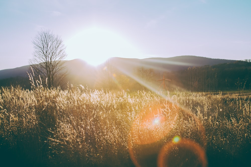 silhouette photo of grass field