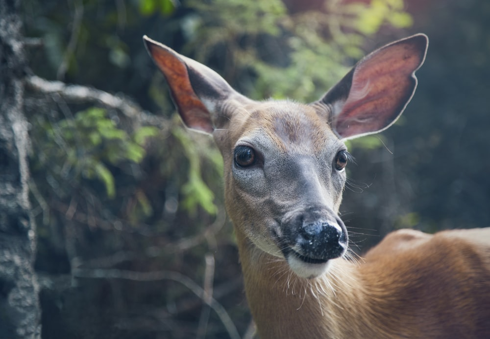 selective focus photo of deer in forest