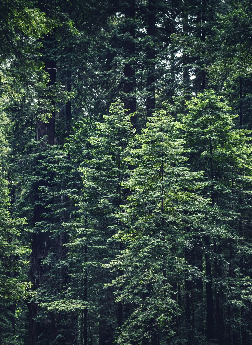 photo of green leafed tree s