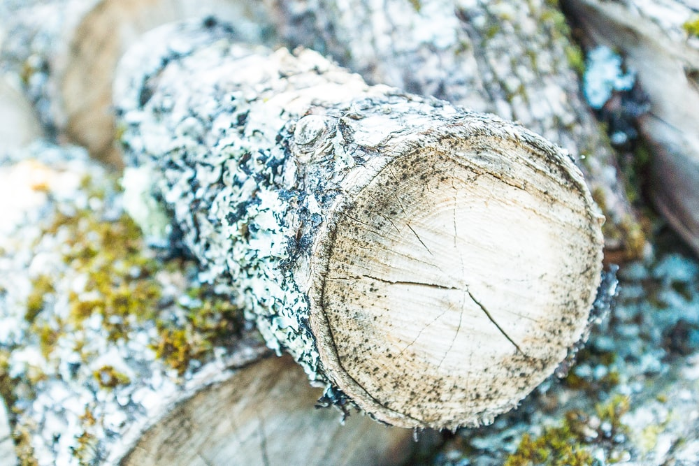 closeup photo of brown firewood