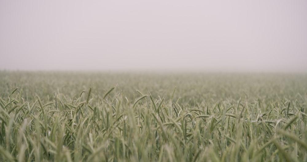 shift-tilt lens photograph of green field