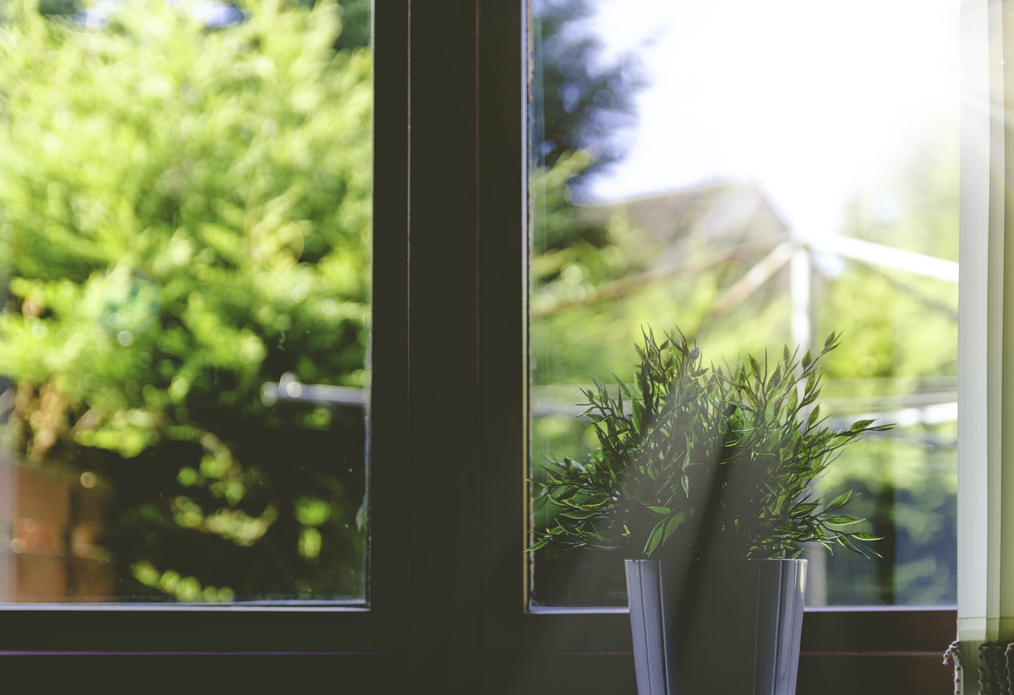 image of green plant in window with sunlight coming through