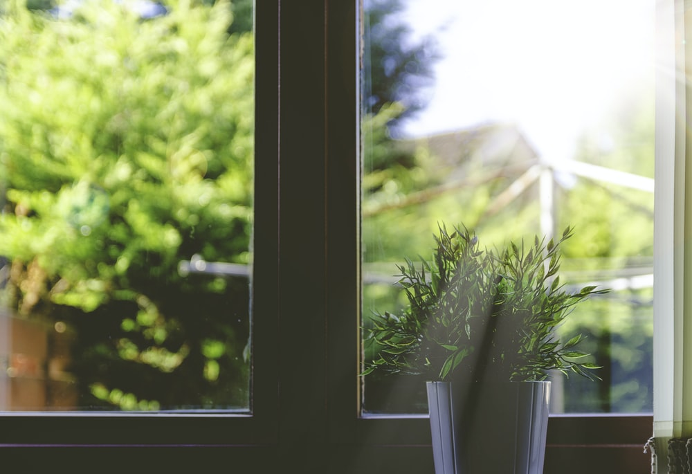 green leafed plant in front of window in shallow focus photography