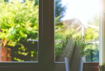 green leafed plant in front of window in shallow focus photography window zoom background