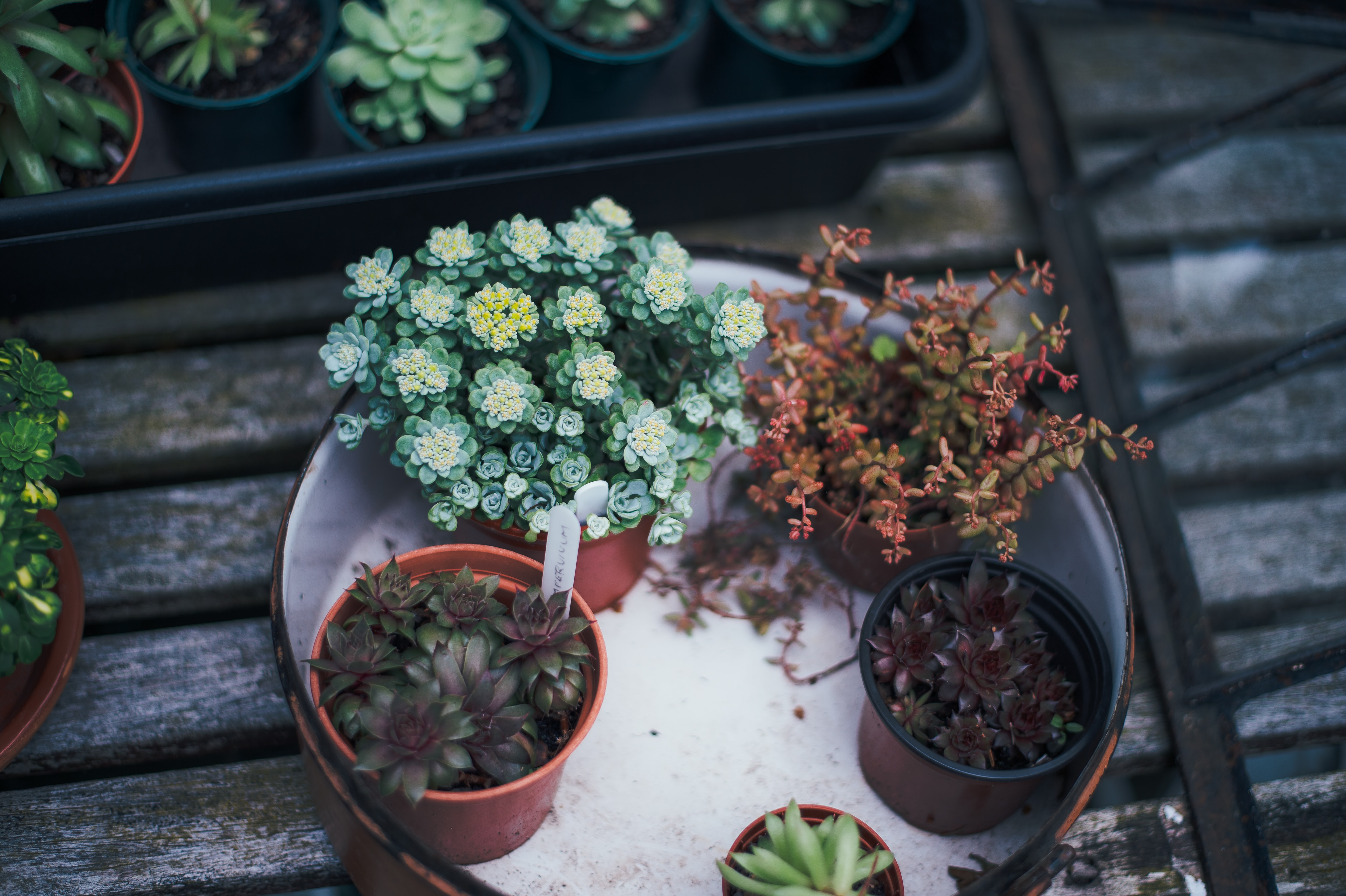 several succulent plants on white tray