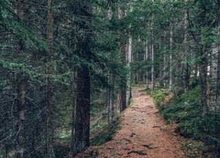 landscape photography of forest trail during daytime